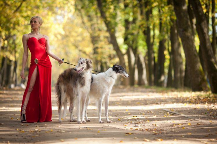 trees path dogs women wallpaper