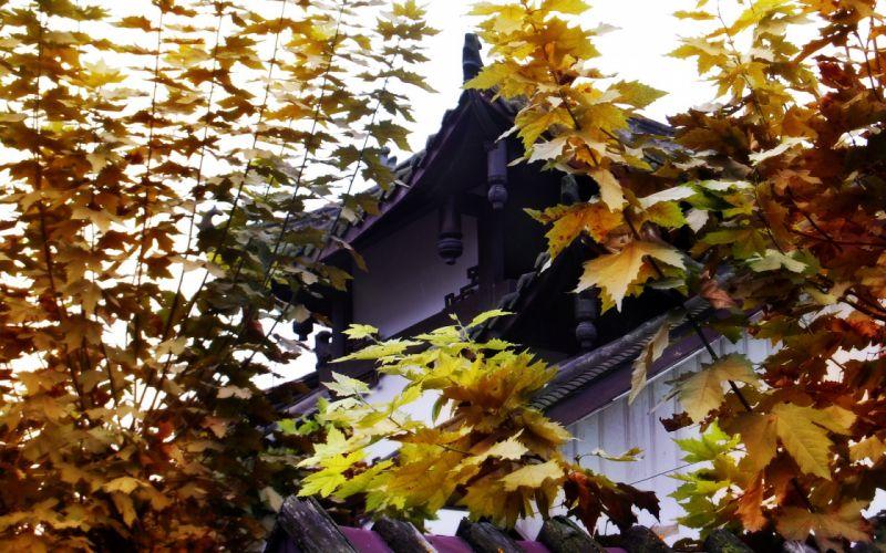 Japan oriental traditional heritage culture landmark nation wallpaper