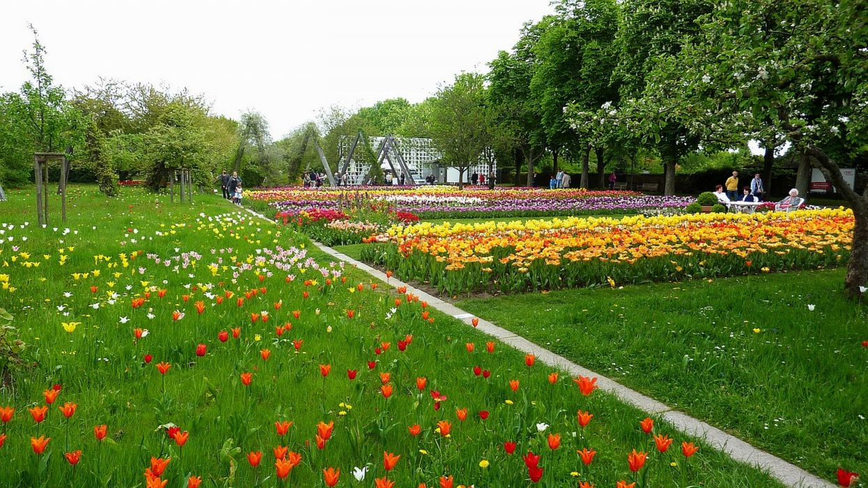 Buga Berlin Germany Tulipan wallpaper
