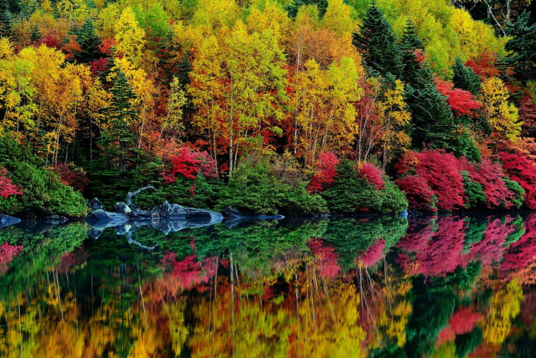 bushes forest trees purple river leaf autumn wallpaper
