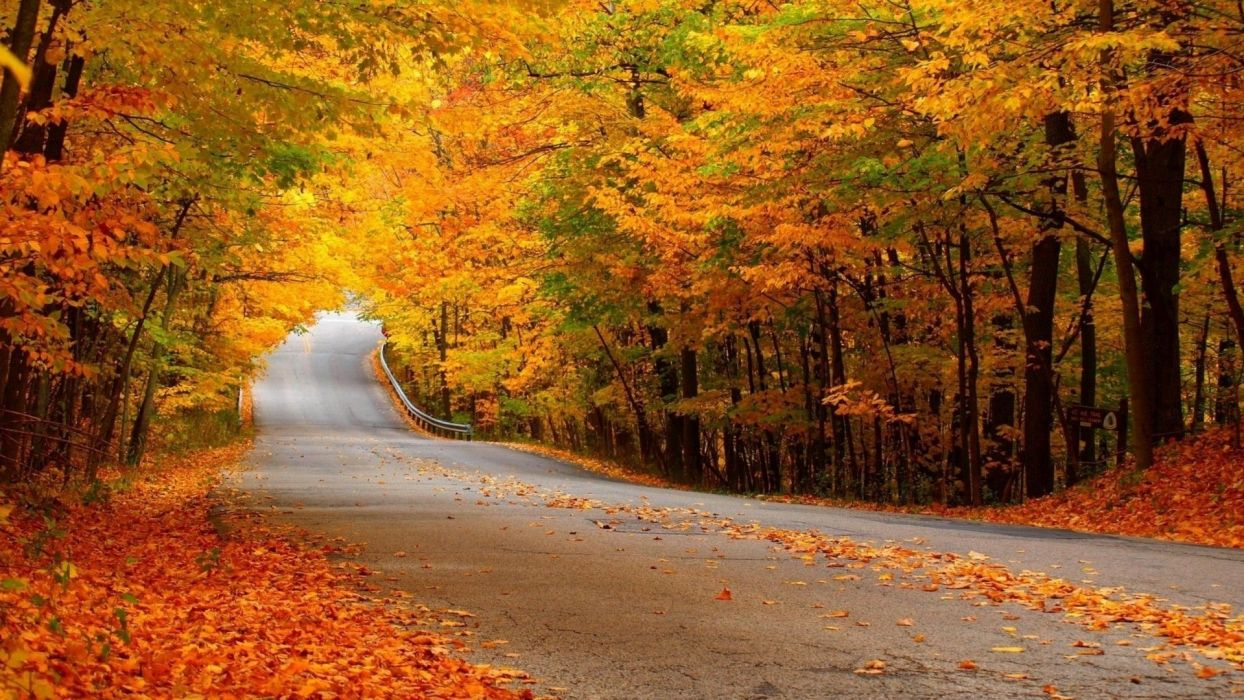 trees nature leaves road autumn wallpaper