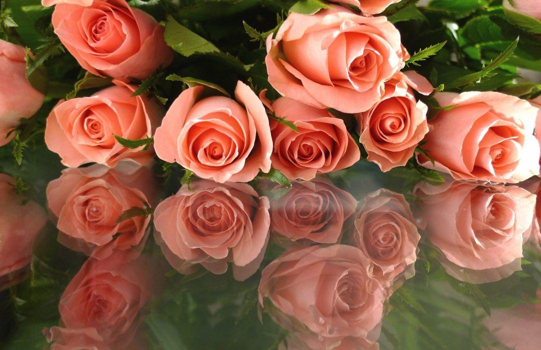 nature flower roses flowers wallpaper