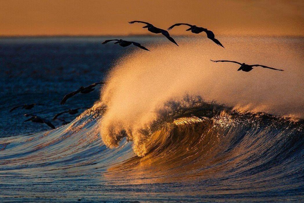 water birds ocean waves wallpaper