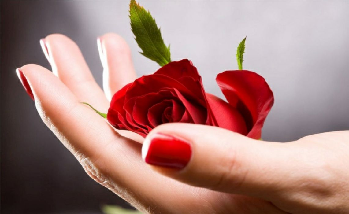 red hand passion love rose wallpaper