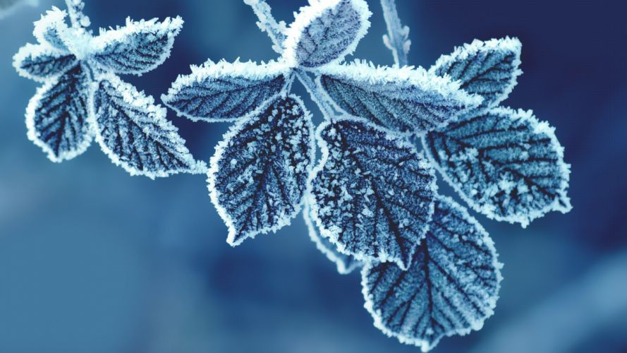 cold leaves-1920x1080 wallpaper