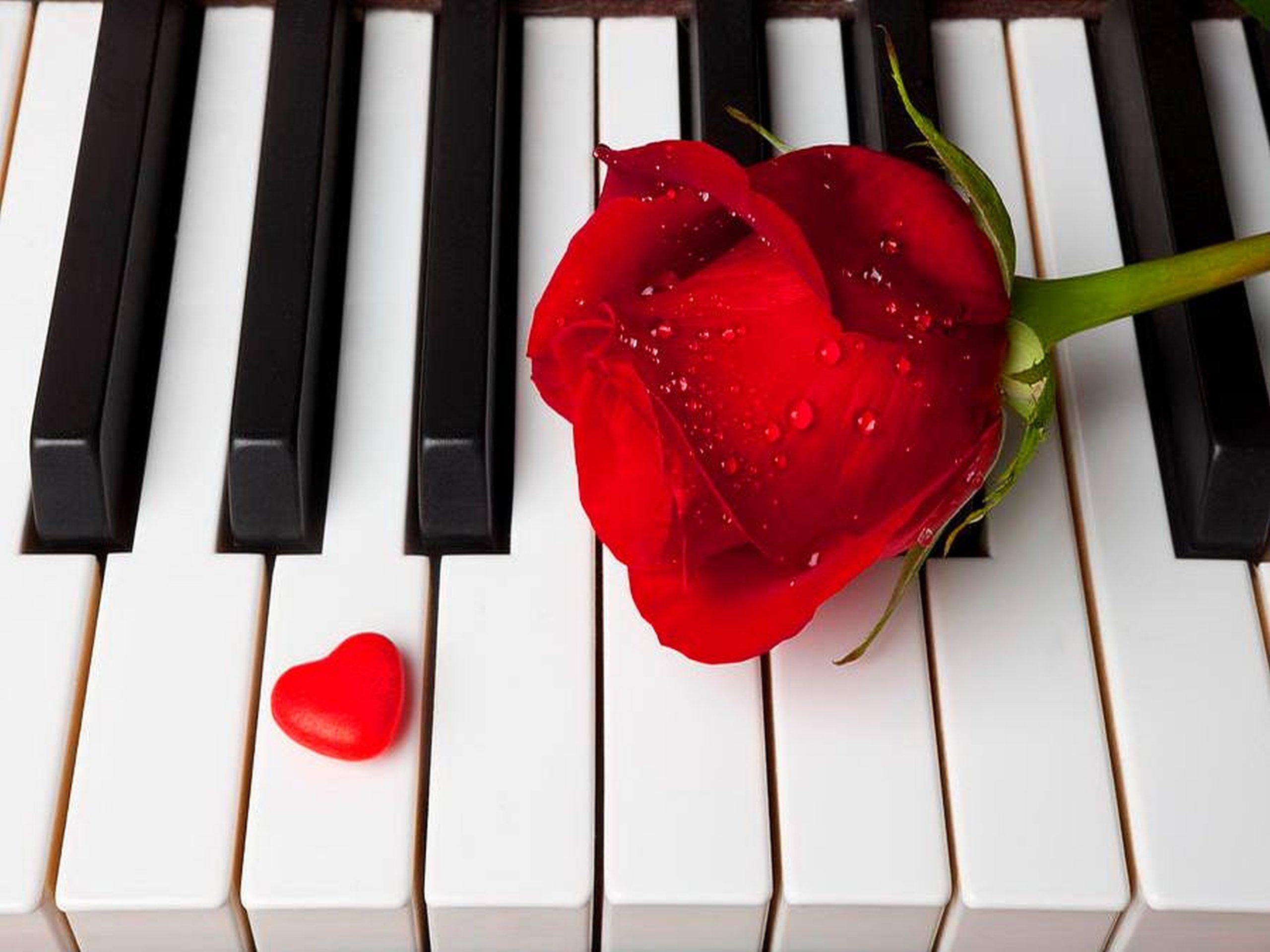 Love - romantic - piano - Harrert-roses wallpaper ...