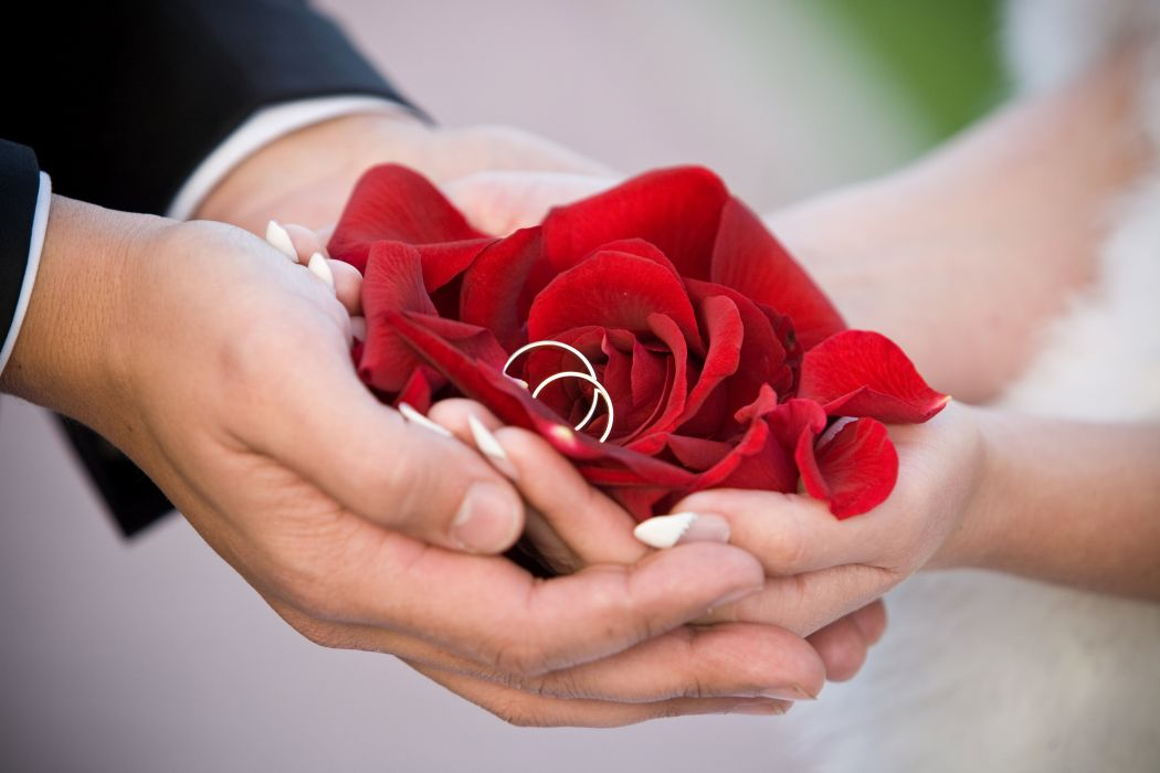 bride wedding rings groom hands rose flowers wallpaper