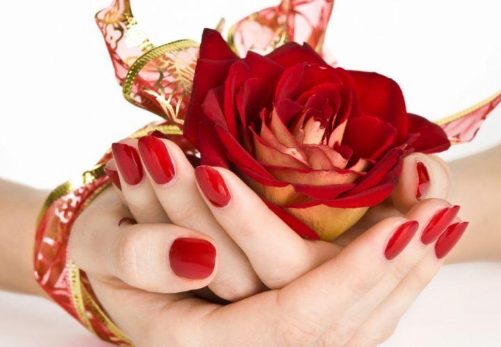 red roses flowers gift lovely wallpaper