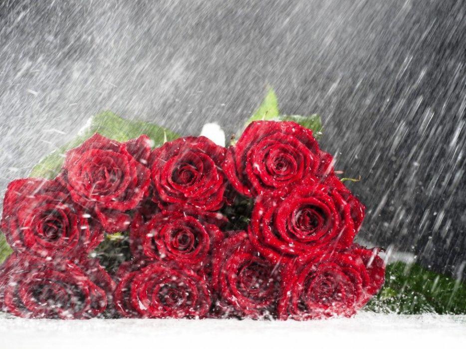 still life roses rain flowers bouquet wallpaper