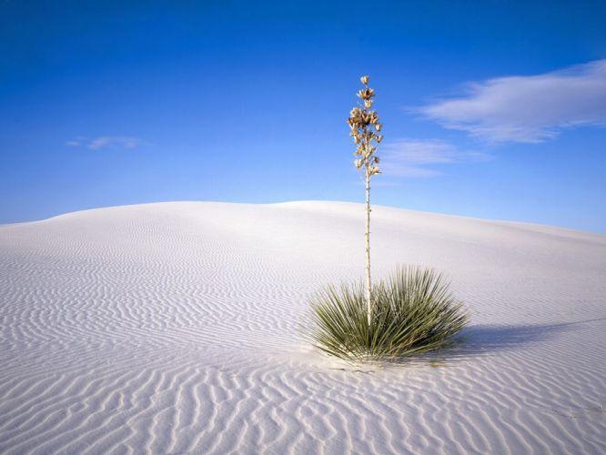 Nature plant desert sky wallpaper