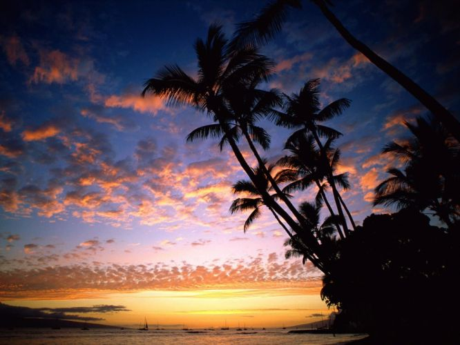 Nature palms sunset sky wallpaper