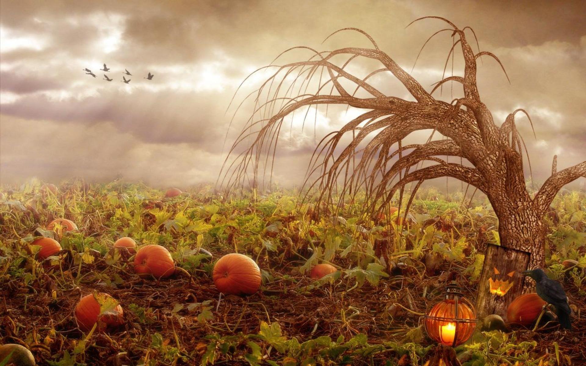 pumpkin moon farm & herbals