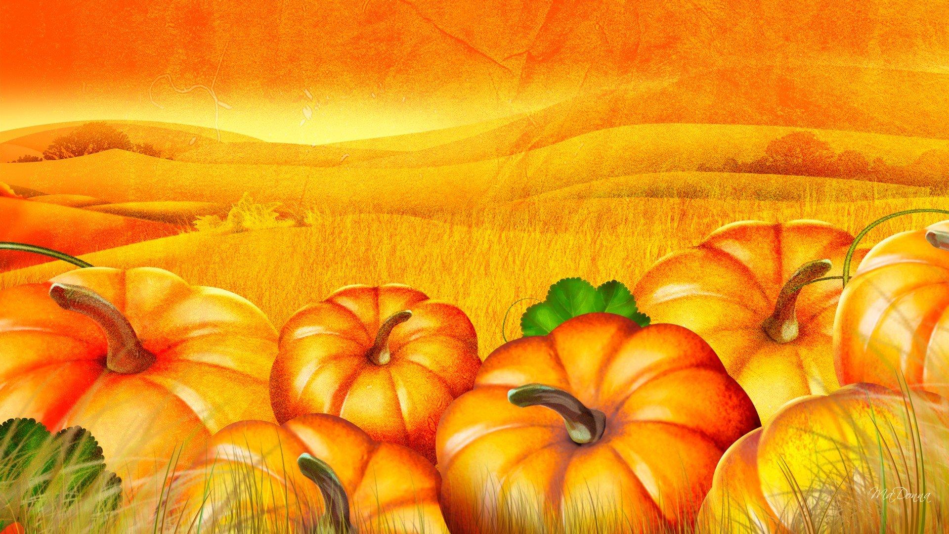 Pumpkin patch halloween autumn wallpaper | 1920x1080 ...
