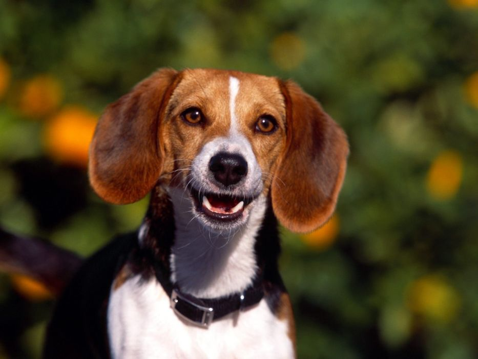 Dog animal cute frendly dogs pet wallpaper