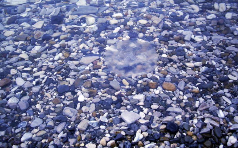 river stones lovely nature wallpaper