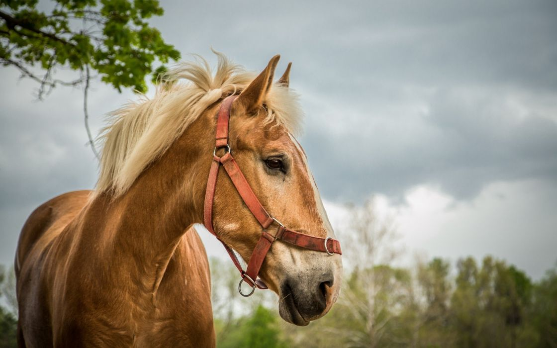 horse animal wallpaper