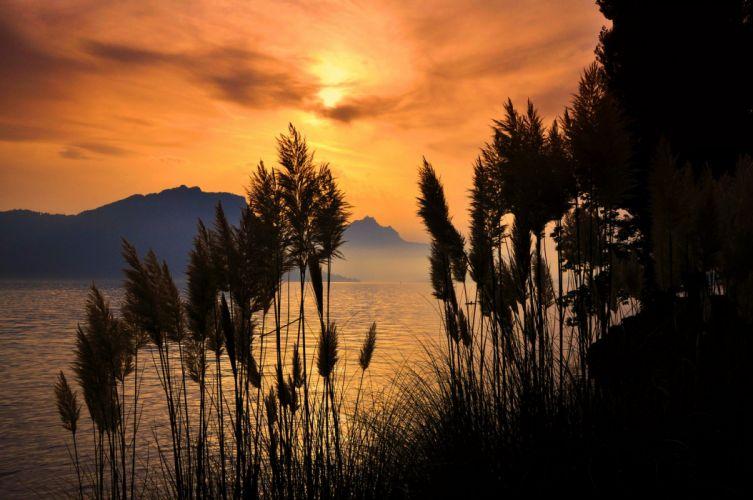sunlight sunset sea mountain reeds forest tree amazing landscape wallpaper