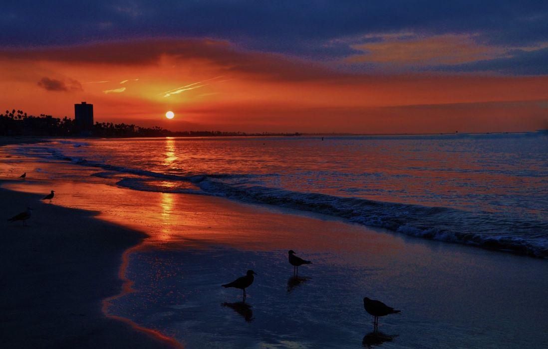 landscape sunset beautiful sea castle gull tree forest wallpaper