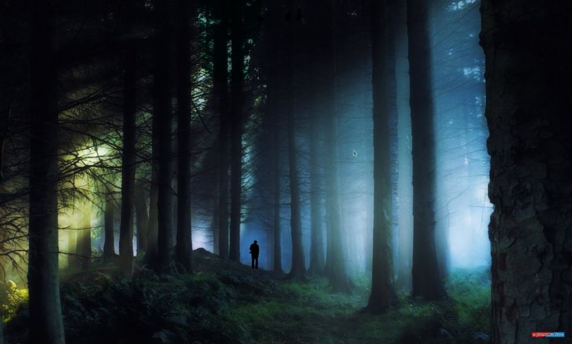 landscape forest dark alone people long tree sun light green wallpaper