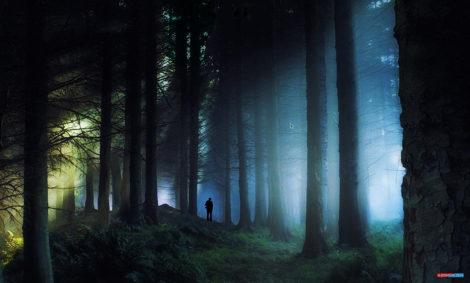 Dark forest landscapes