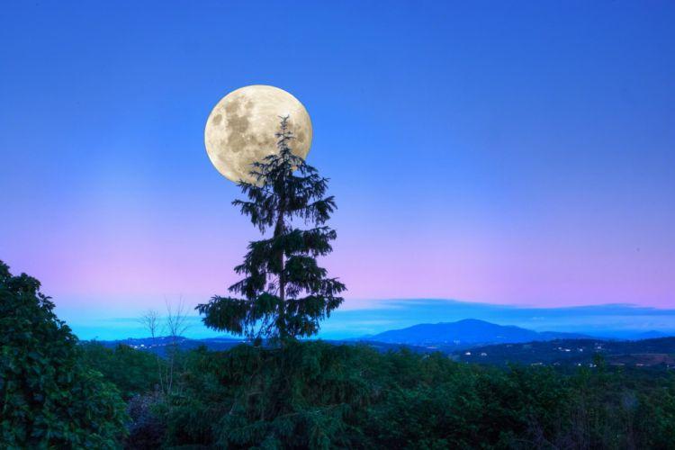 forest Sumarkov moon night trees wallpaper