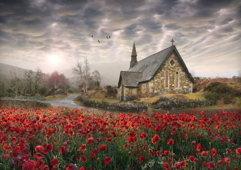 birds poppies church ireland flowers landscape poppy wallpaper