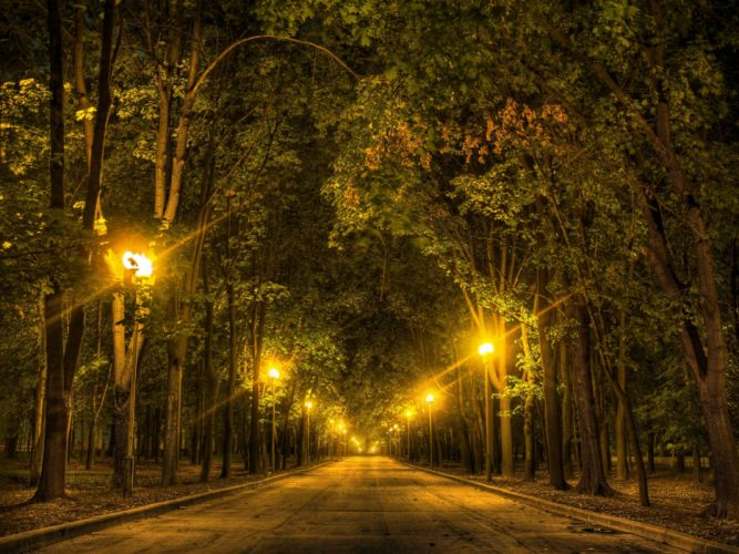 road trees night lights autumn forest wallpaper