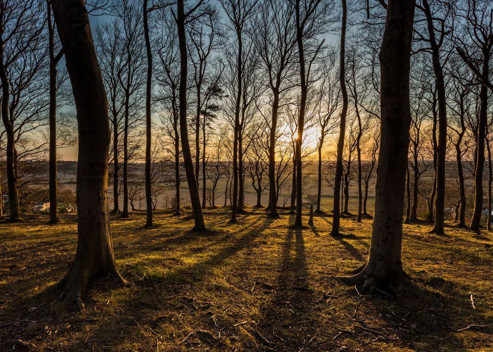 sun sunset forest species trees autumn wallpaper