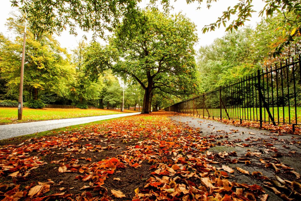 colorful autumn nature leaves forest park trees path road fence wallpaper