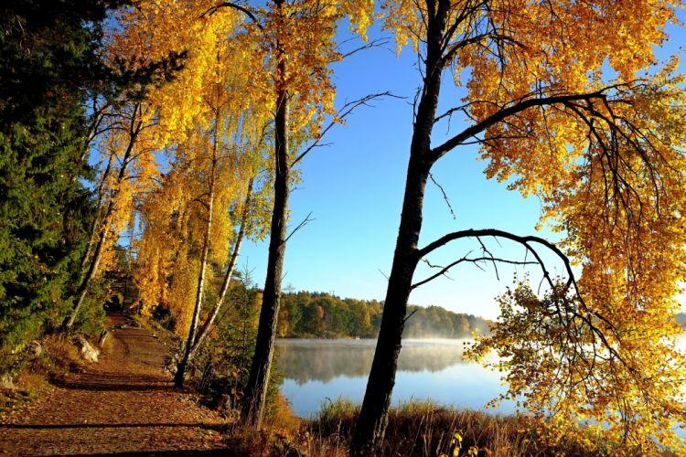 lake autumn road trees landscape wallpaper