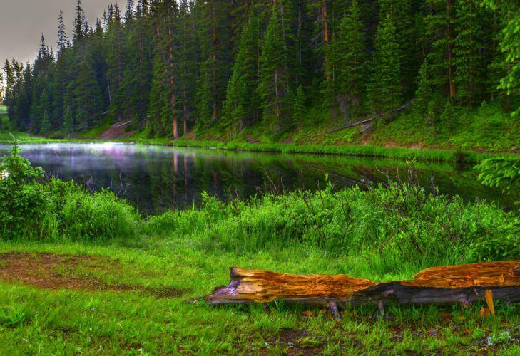 lake forest trees landscape wallpaper