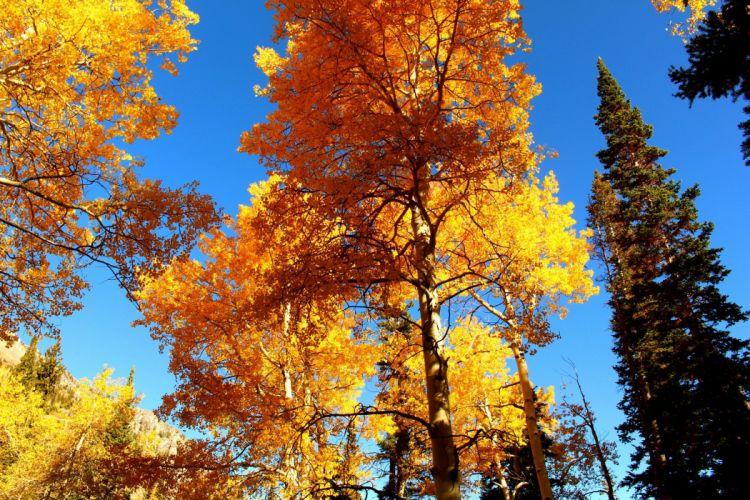 autumn landscape trees nature wallpaper