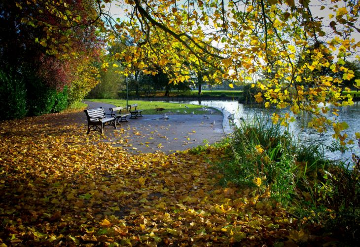 autumn park pond trees leaves landscape wallpaper