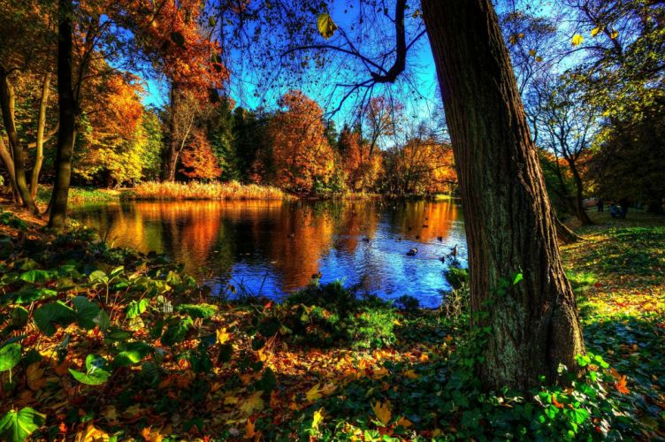 Royal Baths Park Warsawa landscape autumn lake wallpaper