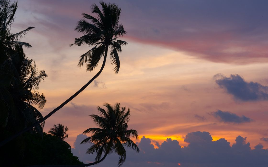Maldives tropical palm trees sunset clouds wallpaper