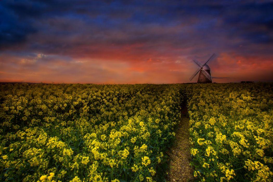 sunset field flowers windmill landscape wallpaper
