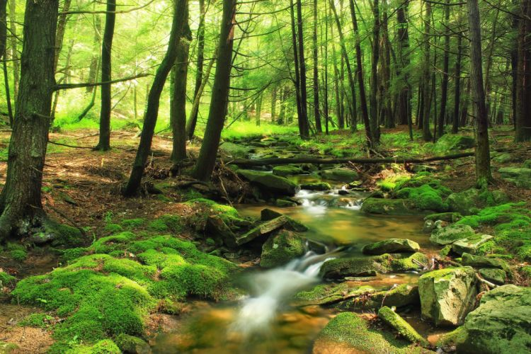 river forest rocks nature wallpaper