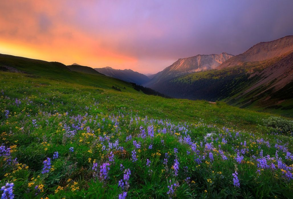 flowers sky meadow Dawson Creek Canada British Columbia wallpaper