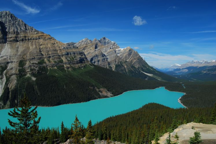 lake mountain forest landscape Peyto Lake Banff National Park Canada Peyto Canada trees firs wallpaper