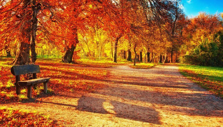 park leaves autumn trees bench wallpaper