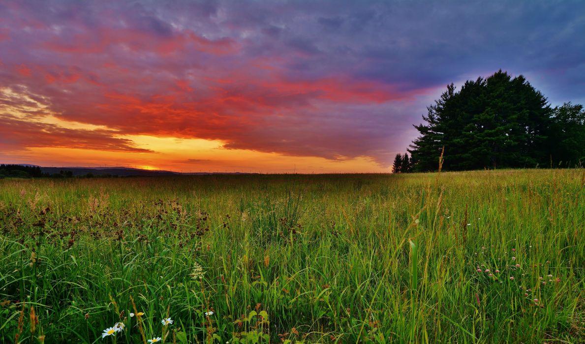 sunset field trees landscape wallpaper