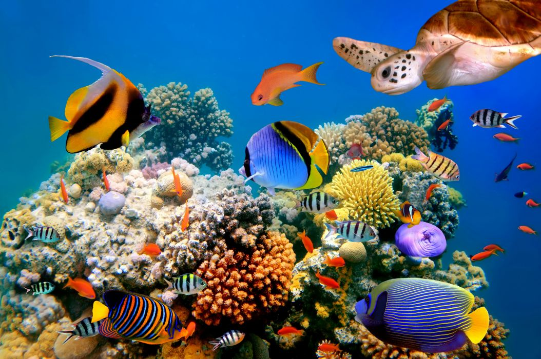 Underwater world fish turtles corals tropical sea ocean coral reef wallpaper 4000x2657 - Sea coral wallpaper ...