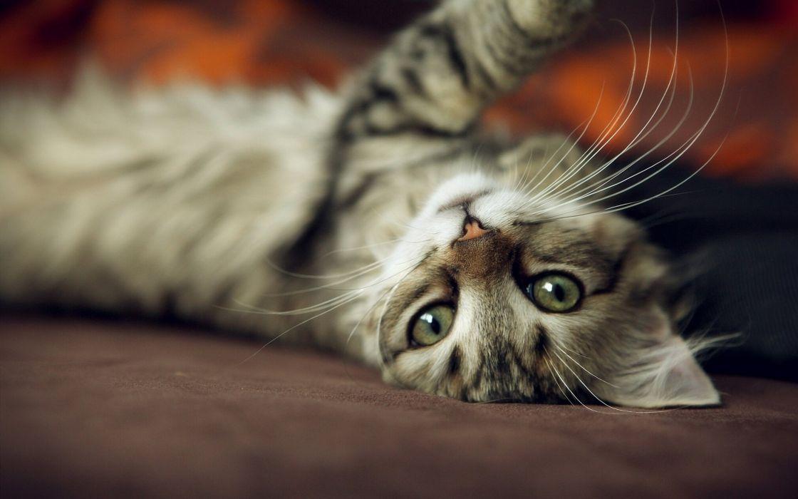 cat muzzle whiskers rasslabon wallpaper