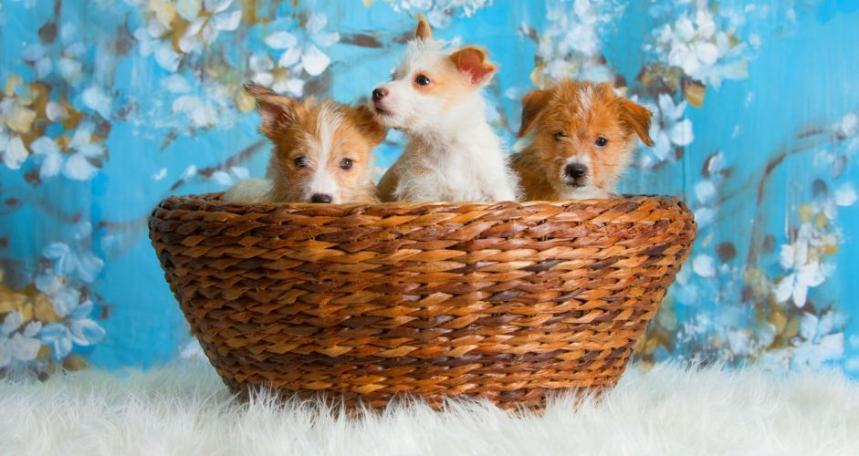 dogs puppies puppy baby wallpaper