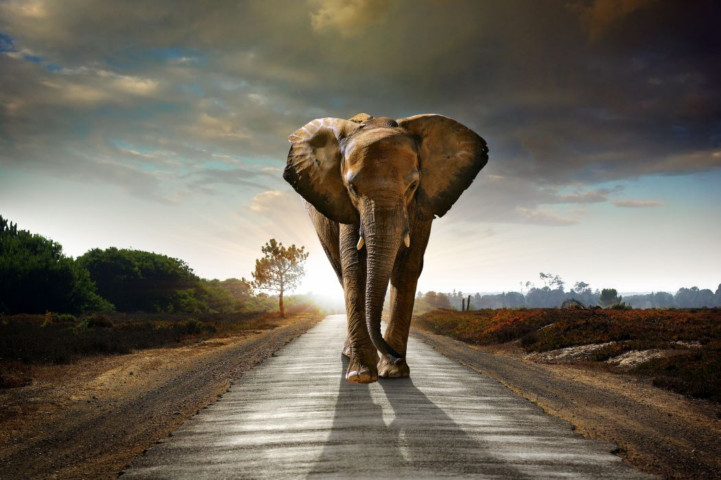 Elephant Roads Sunrise and sunset Animals Nature wallpaper