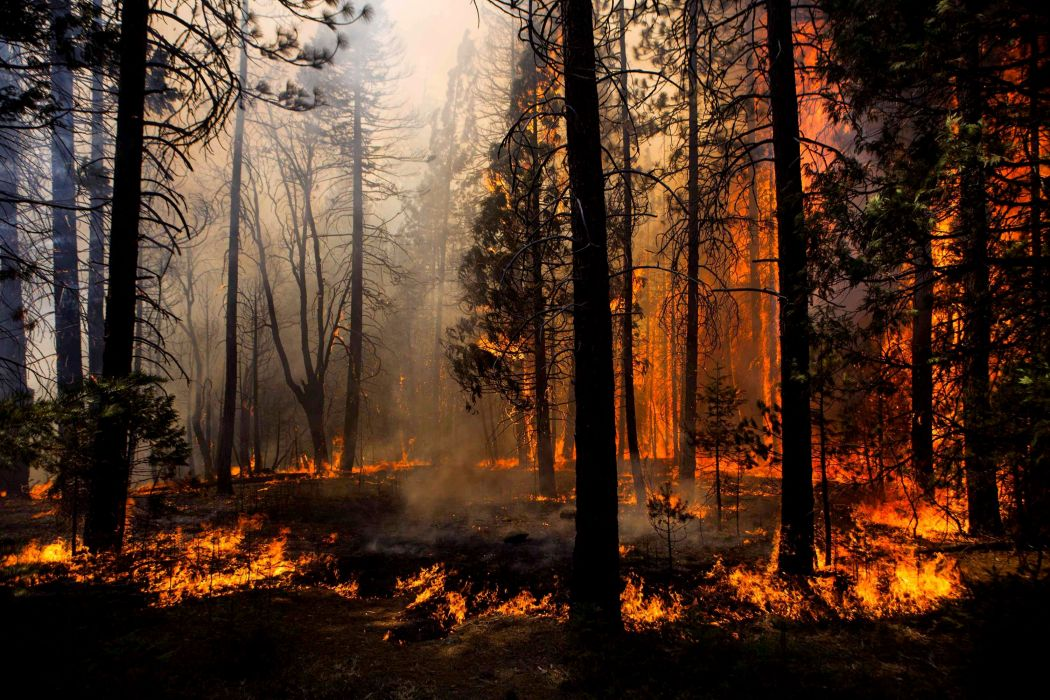 Forest fire trees nature wallpaper 3000x2000 486831 wallpaperup forest fire trees nature wallpaper voltagebd Gallery