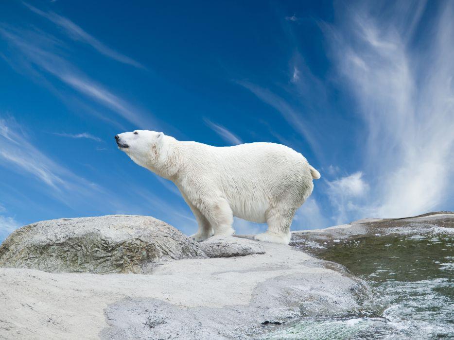 Polar bear Sky Animals Nature wallpaper
