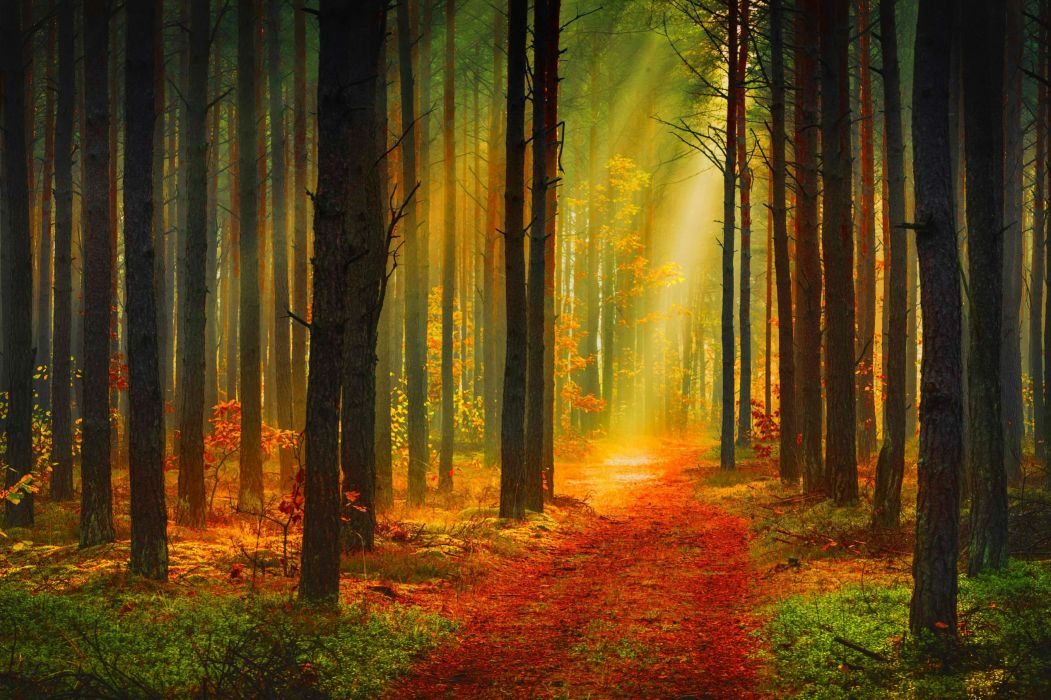 Seasons Autumn Forest Trunk tree Rays of light Trail Nature wallpaper