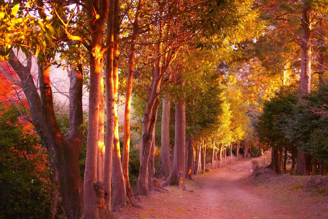Seasons Autumn Parks Trees Trail Nature wallpaper