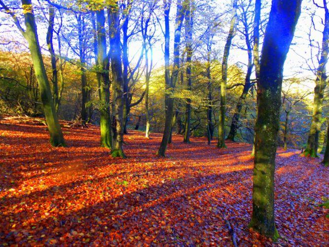 Seasons Autumn Trees Foliage Nature wallpaper